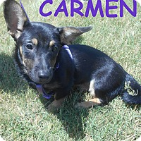 Adopt A Pet :: Carmen - Derry, NH