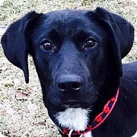 Adopt A Pet :: Emma - Minneapolis, MN