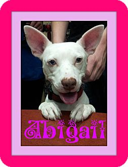 Bull Terrier Mix Dog for adoption in Tracy, California - Abigail
