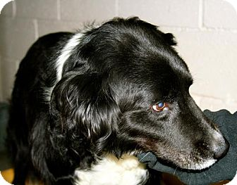 Border Collie Mix Dog for adoption in Erwin, Tennessee - Elwood