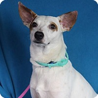 Adopt A Pet :: Barnaby - Minneapolis, MN