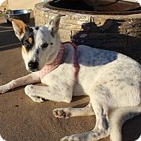 Adopt A Pet :: Wimberley - Austin, TX