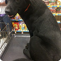 Adopt A Pet :: Hailey-IN CT - Manchester, CT