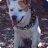 Adopt A Pet :: Trapper - Lebanon, ME