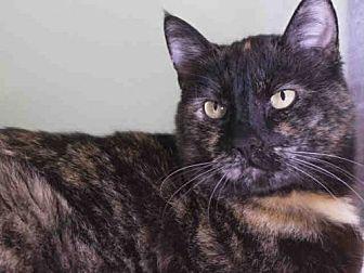 Domestic Mediumhair Cat for adoption in Carlsbad, California - DELILAH