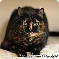 Adopt A Pet :: Teagen - East Hartford, CT