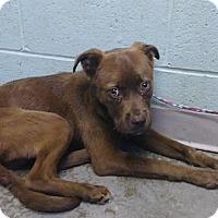 Adopt A Pet :: Alegra - ADOPTED - Decatur, GA