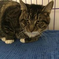 Adopt A Pet :: Robin - Huntingdon, PA
