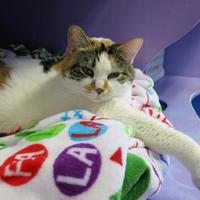 Adopt A Pet :: Tootsee - Northbrook, IL