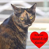 Adopt A Pet :: Lefty - San Leon, TX