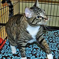 Adopt A Pet :: Deacon - Duluth, GA