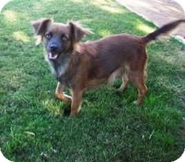 Spaniel (Unknown Type) Mix Dog for adoption in Tustin, California - Maggie