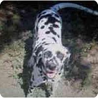Adopt A Pet :: Quint - League City, TX