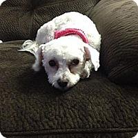 Adopt A Pet :: Lucy - Saskatoon, SK
