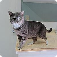 Adopt A Pet :: Bluto - Kingston, WA