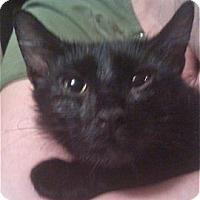 Adopt A Pet :: Alice - Colorado Springs, CO