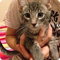 Adopt A Pet :: Hector - Chandler, AZ