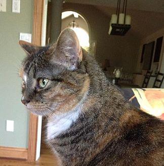 Domestic Mediumhair Cat for adoption in Cincinnati, Ohio - zz 'Lucy' courtesy listing