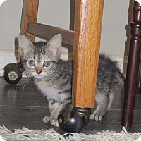 Adopt A Pet :: Iris - Port Republic, MD