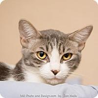 Adopt A Pet :: Laverne - Fountain Hills, AZ