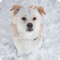 Adopt A Pet :: Rex - Drumbo, ON
