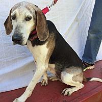 Foxhound Mix Dog for adoption in Bremo Bluff, Virginia - Glenda