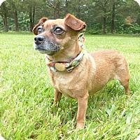 Adopt A Pet :: Bobo - Mocksville, NC