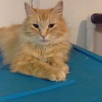 Adopt A Pet :: Hunny - Brainardsville, NY