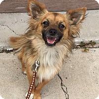 Adopt A Pet :: Stevie - San Diego, CA