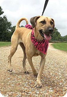 Black Mouth Cur Mix Dog for adoption in St. Francisville, Louisiana - Thelma