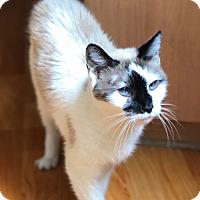 Adopt A Pet :: Sweetie and Otis - Novato, CA