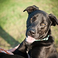 Adopt A Pet :: Curly - Wichita Falls, TX