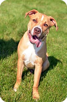 Labrador Retriever Mix Dog for adoption in Columbus, Ohio - Marty