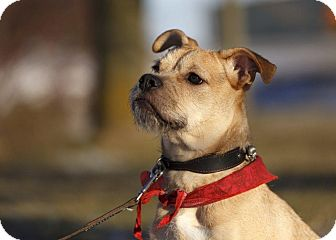 Terrier (Unknown Type, Medium) Mix Dog for adoption in Ile-Perrot, Quebec - Shawna