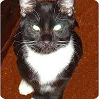 Adopt A Pet :: Oreo - Hampton, CT
