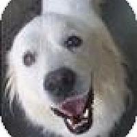 Adopt A Pet :: Zoey - Dandridge, TN