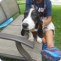 Adopt A Pet :: Regis - Cincinnati, OH