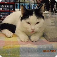 Adopt A Pet :: Hailey - Riverside, RI