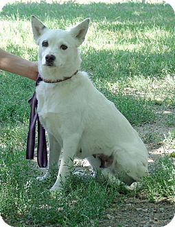 Australian Cattle Dog Mix Dog for adoption in Gridley, California - Melody