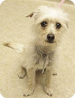 Terrier (Unknown Type, Small) Mix Dog for adoption in Spokane, Washington - Robbie