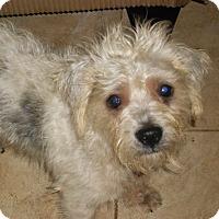 Adopt A Pet :: TREVOR - Raleigh, NC