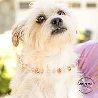 Adopt A Pet :: RAGGS - Inland Empire, CA