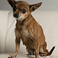 Adopt A Pet :: Tuesday-Thrusday - Inglewood, CA