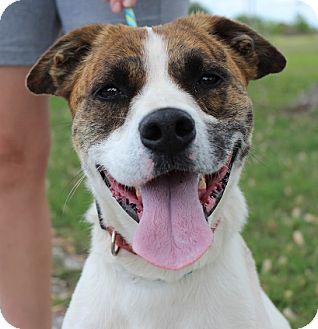 Boxer Mix Dog for adoption in Owasso, Oklahoma - Layla