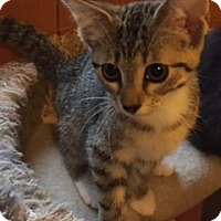 Adopt A Pet :: Jumper - Chattanooga, TN