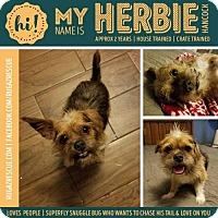 Adopt A Pet :: Herbie Hancock - New Port Richey, FL
