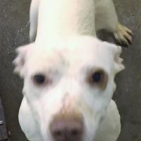 Adopt A Pet :: Mel - Paducah, KY