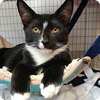Adopt A Pet :: Hermy - Umatilla, FL