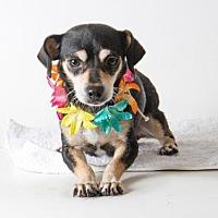 Adopt A Pet :: KISHA - Sacramento, CA