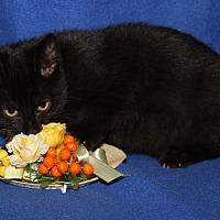 Adopt A Pet :: Gina - Marietta, OH